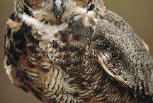 »Owls«