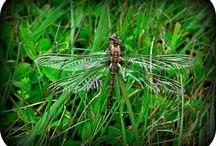 Writing - Dragonfly