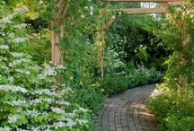 Townhouse garden ideas