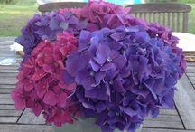 Lousa flowers