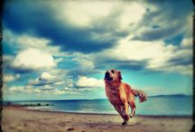 Man's Best Friend / collection of dog photos across the seasons
