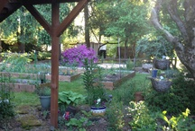 My Garden 2013 / this is how my garden is this year! / by debbie bakos