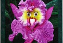 fiori che sembrano altro