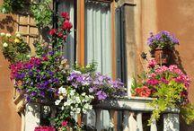 ventanas floridas