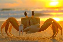 Crabby Summers