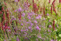 Jardin naturaliste / Le jardin naturaliste imite la nature. Souvent composé à partir de vivaces et de graminées, il forme de superbes prairies.