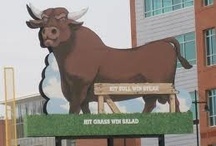 America's Minor League Team / by Durham Bulls