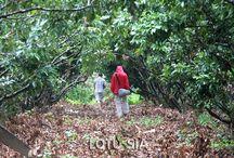 Vietnam trekking tours / 0