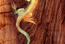 2. Marquetry / by Beverly Bauer