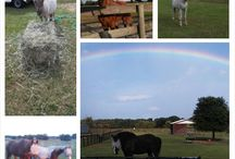 Horses of Beauty's Haven Equine Rescue / This is where we will post photos of the horses of Beauty's Haven as well as the humans that care for them.