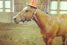 Humour unicorn