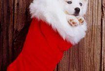 Hund+Nikolaus
