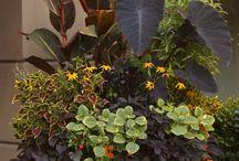 gardening / by Carol Pettijohn