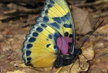 Butterflies<3 / by Cory Bird