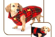 Dachshund Autumn and Winter Coats! / Warm wool coats lined with cozy microfleece chase away autumn and winter chills, and are designed to fit the broad chest and long and low body of your dachshund perfectly...handmade with love in the U.S.A.