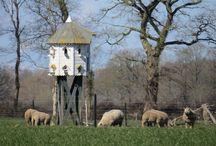 Duiventillen / In het buitengebied en nabij landgoederen in Overijssel staan mooie duiventillen