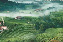 Wine&Dine / Places to dine, wine to taste