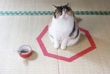 Cat Tips & Tricks / Find much everything about Cat Tips & Tricks here.