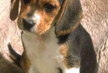 Salut / Quan la teva mascota necessita un veterinari