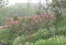 tuinieren:plantcombinaties