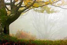Trees / by Alexandra Ratcliff