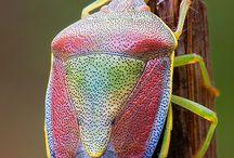 hmyz,motýly, můry