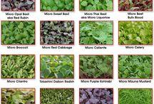 Mikro greens