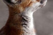 Из мира животных / Животные, насекомые и еже с ними