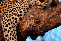 beautiful animal creaters