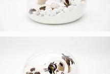 terrariums / by DIY Runaway