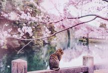 Tájképek/Állatok