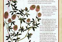 Pflanzen und Kräuter