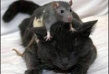 hamsters,mouses and rats