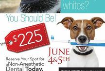 Pet Dentistry / Non-Anesthetic