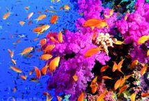Coral reef / korálový útes hraje všemi barvami