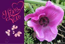 Bilder / Fotos Liebe Love - Legakulie / Sie finden auf dieser Seite #http://kostenlose-fotos-bilder-sprueche-legakulie.de/ #lizenzfreie, weil von mir selbst fotografierte und verschönerte #Bilder, kostenlos zum Download. #http://kostenlose-fotos-bilder-sprueche-legakulie.de/impressum-agb.html