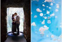 Aquarium of the Pacific Photo Sessions / Photo sessions taking place at the Aquarium of the Pacific in Long Beach, CA