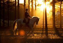 Sport - Horse Riding