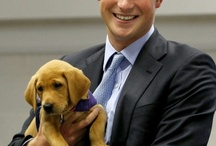 Prince Harry and puppy golden