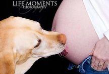 zwangerschap en hond