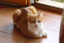 Cat ...  =^.^=  ROMEO / gatto bianco/rosso