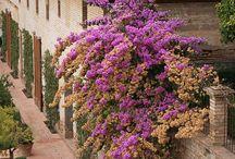 Granada / Fotos sobre Granada, ciudad y provincia. La Alhambra, la Alpujarra...