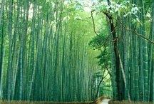 Bamboo over the World