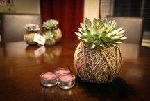 Kokedama Succulents / Kokedama is a Japanese form of Bonsai, purchase these now through our online store. All handmade in the UK.