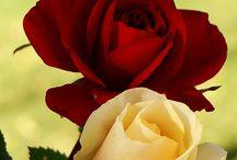 Colour   Flowers & Gardens