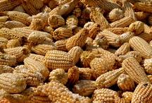 Mexican Corn / Corn