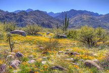 Desert Dreams / Enchanting and landscapes. The Sonoran desert is a harsh environment, as brutal as it is beautiful. It can also be quite mild at times, and the stunning sunsets are like nowhere else. The electrical storms are impressively fast, furious, and dramatic. They put on quite the show of light and sound. Plants and animals do thrive here, and there is a rich diversity of living things, creatures great and small.