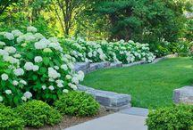 gardening ideas / gardening