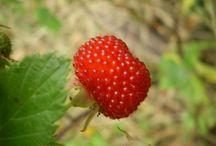 van Veen Organics / permaculture, food forests, edible gardens www.vanveenorganics.com