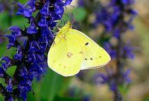 Butterflies, Bees, and Moths